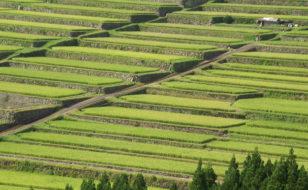 長方形区画の水田