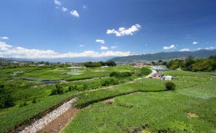 勝沼のブドウ畑とワイナリー群