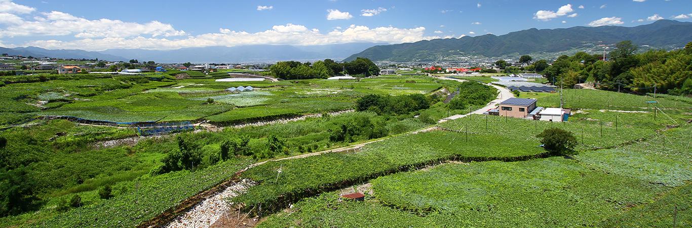 勝沼のブドウ畑とワイナリー群(仮)