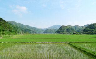 今富の農村風景
