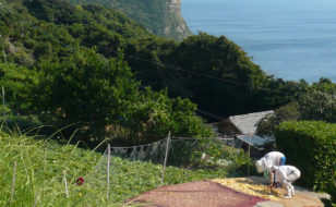 蕨集落の土地利用と農作業風景